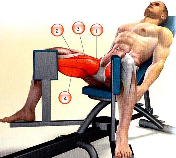 Мышцы работающие при сведении ног