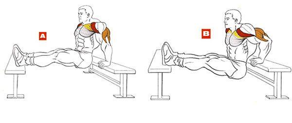 Работа мышц при обратных отжиманиях