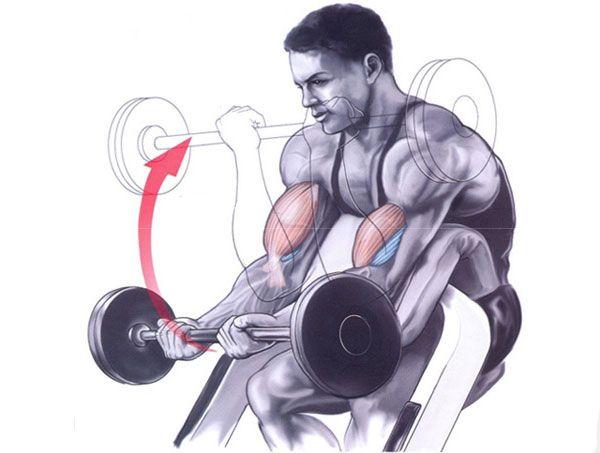 Упражнение на бицепс и брахиалис