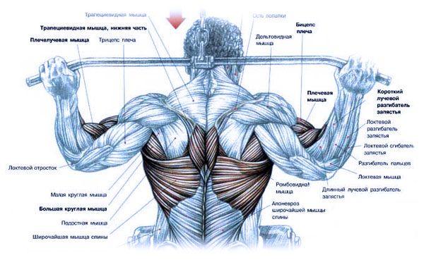 Тренировка широчайших мышц на блоке