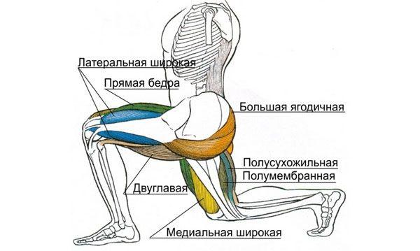 Мышцы при выполнении выпадов