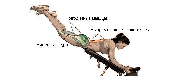 Мышцы при выполнении обратной гиперэкстензии