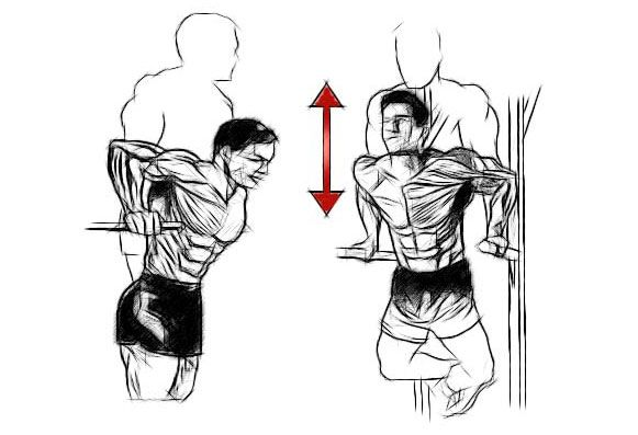 Отжимания на брусьях для мышц груди