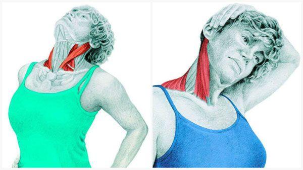 Растягиваем мышцы шеи