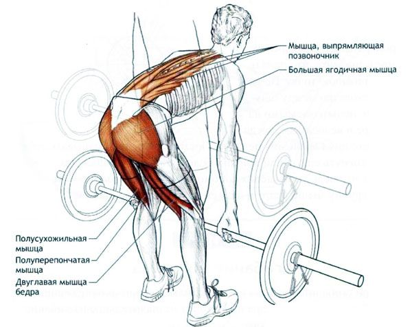 Работа мышц при выполнении упражнения