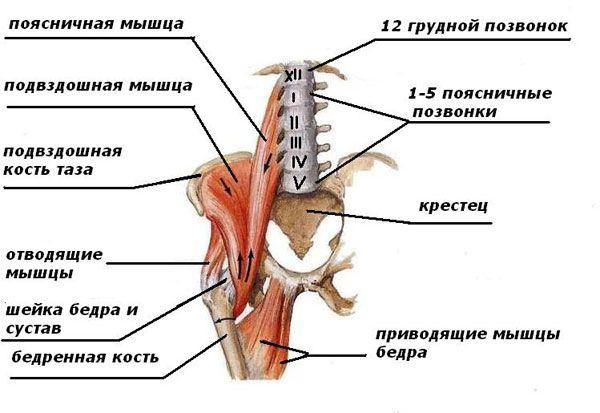 Поясничные мышцы