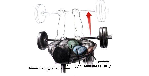 Работа мышц при жиме узким хватом