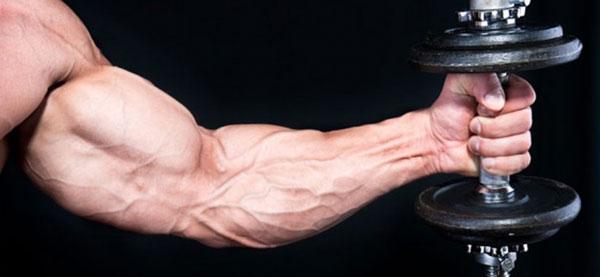 Мышечная кислота