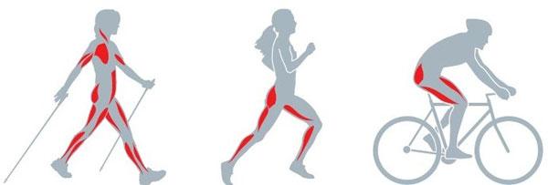 Работа мышц при разных видах активности