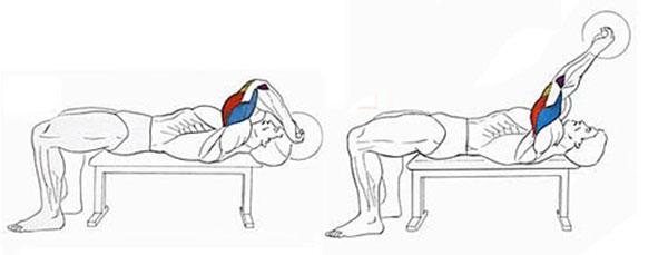 Упражнения с гантелями на бицепс и трицепс