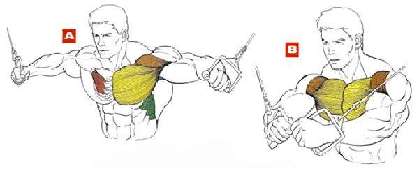 Кроссовер мышцы