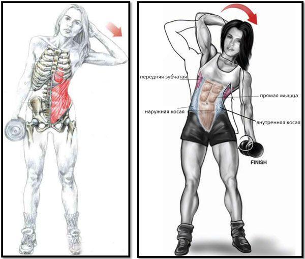 Работа мышц при наклонах