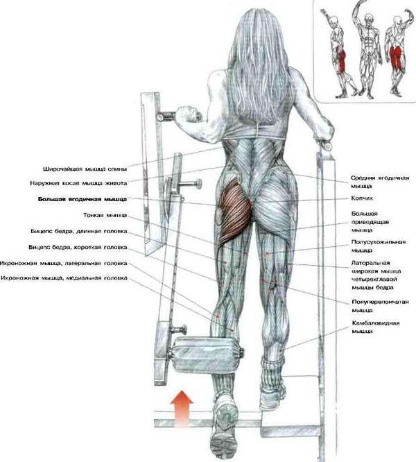 Мышцы при выполнении упражнения