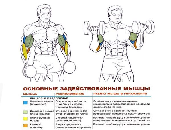 Нагрузка на мышцы при выполнении подъемов