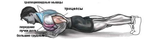 Мышцы при отжиманиях узким хватом