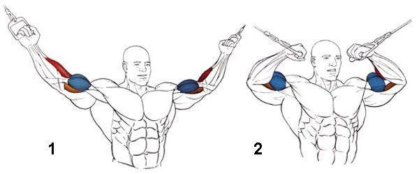 Тренировка рук на тренажере для кроссоверов