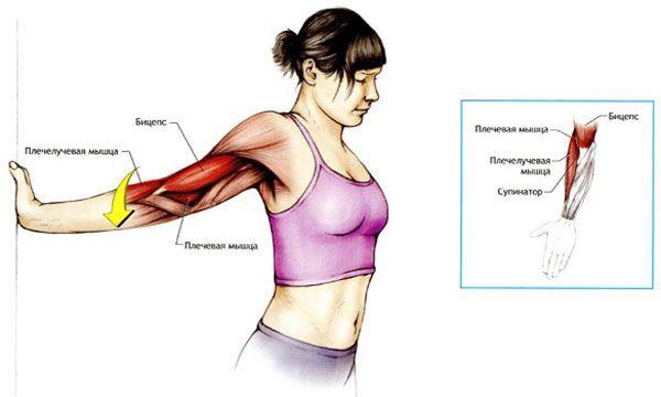 Растяжка плечевого сустава упражнения метод максималь.разгибания конечности в суставе
