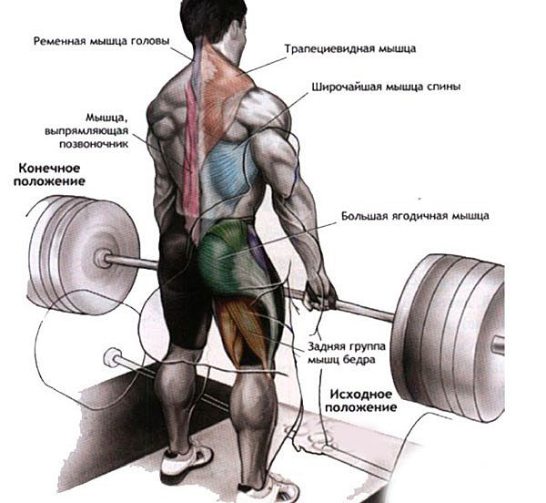 Работающие во время тяги мышцы
