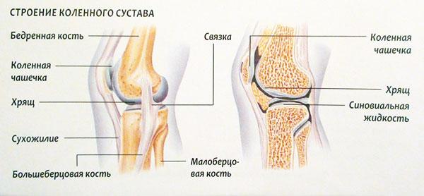 Щелкает коленный сустав у грудничка тату на локтевом суставе