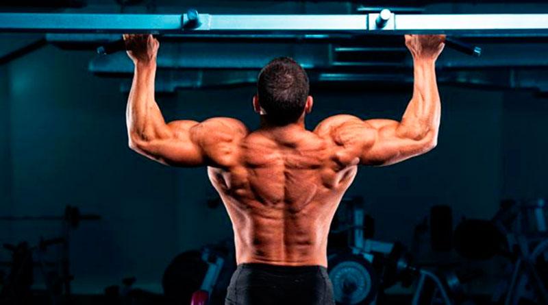 тренировка на бицепс и спину