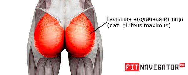 Большая ягодичная мышца (gluteus maximus)
