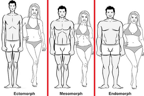 Эктоморф, мезоморф, эндоморф (мужчина и женщина)