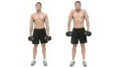 Качаем трапециевидные мышцы дома и в зале — упражнения для трапеций